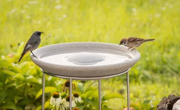 Set Vogeltränke Granicium® mit Ständer aus Edelstahl - VTG+ST
