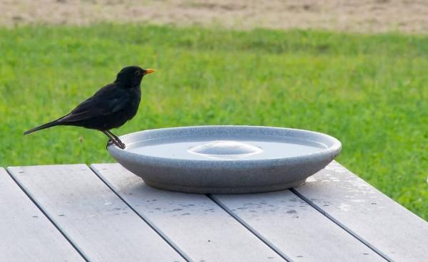 Vogeltränke aus Granicium® - VTG